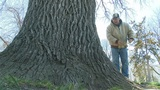 "Hunt is on to find ""champion trees"" around Grand Island"