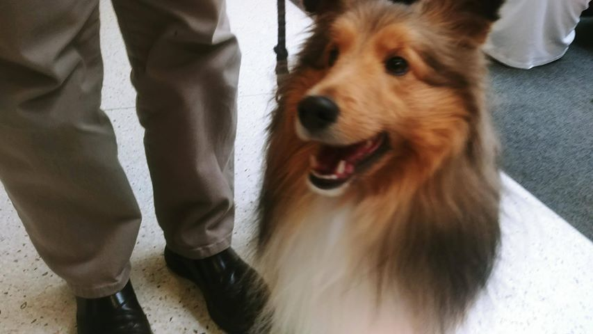 "Registered teams from Therapy Animals of Utah visit the University of Utah for ""Pause for Paws&quot; on Wednesday. (Photo: Brian Morris / KUTV){&amp;nbsp;}{&amp;nbsp;}<p></p>"