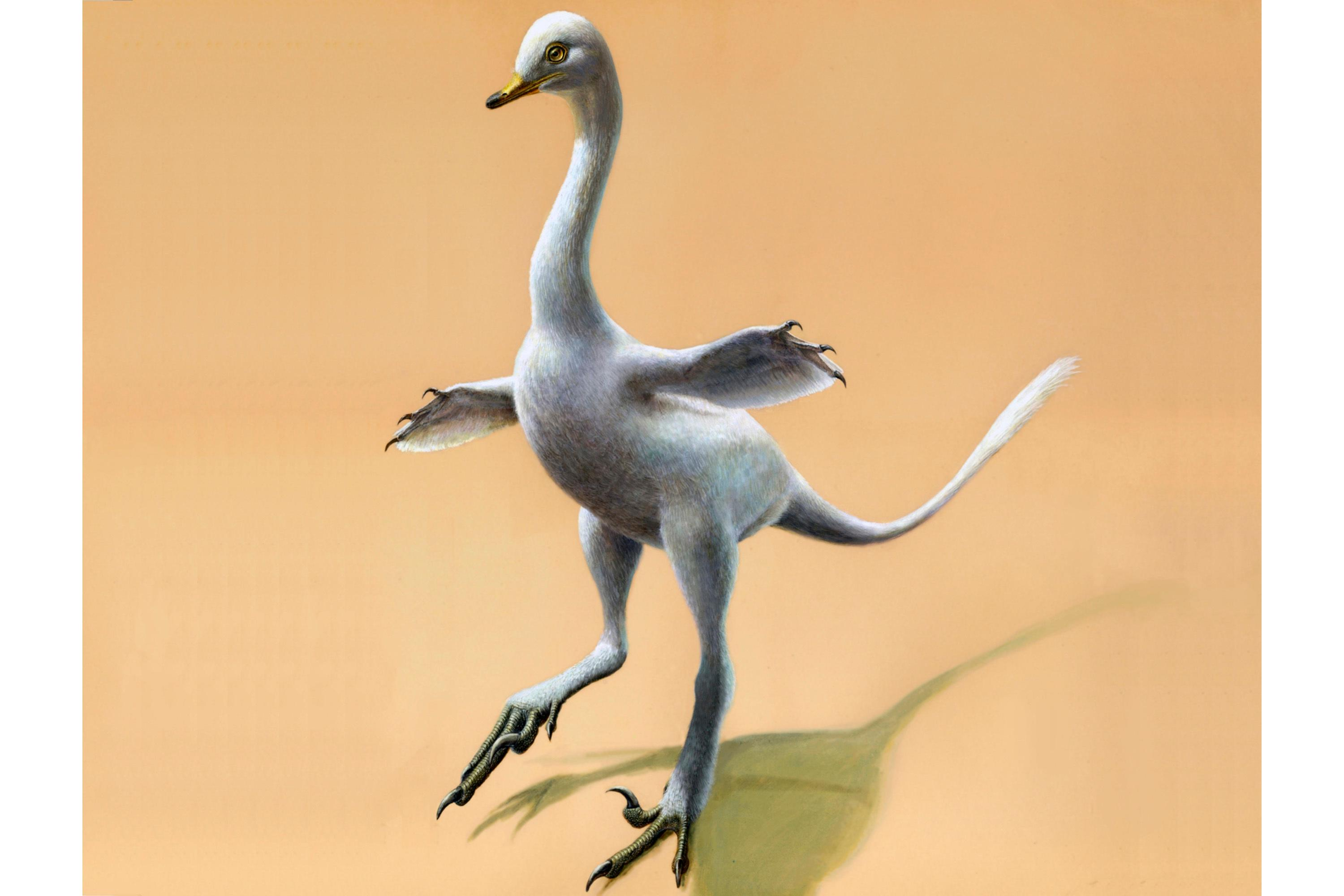 This illustration provided by Lukas Panzarin, with Andrea Cau for scientific supervision, shows a Halszkaraptor escuilliei dinosaur. The creature, about 18 inches (45 centimeters) tall, had a bill like a duck but teeth like a croc's, a swan-like neck and killer claws. (Lukas Panzarin via AP)