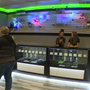 Anne Arundel's first marijuana dispensary opens