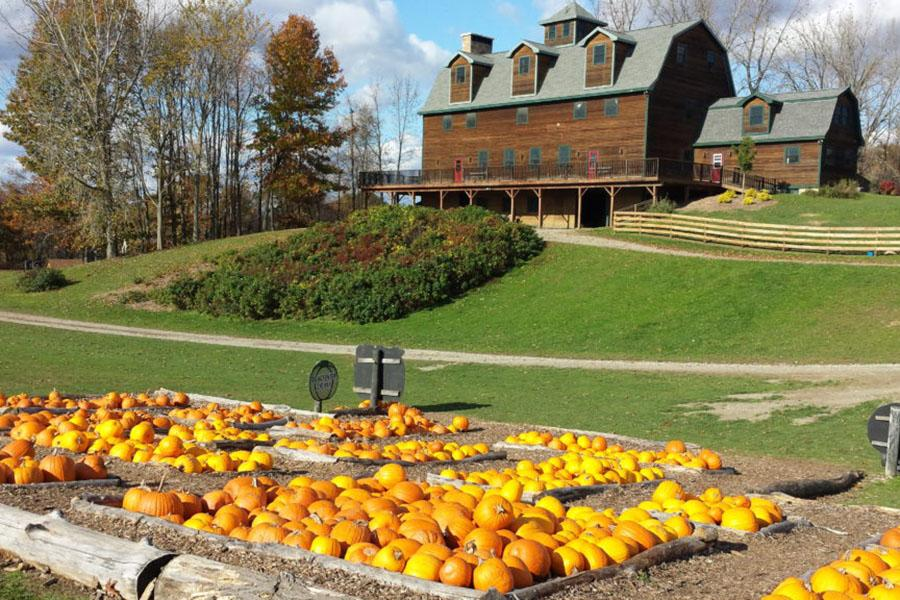 Liberty Ridge Farm is a quick ride from Albany, and it's the perfect place to enjoy the bounty of the fall season with your family.
