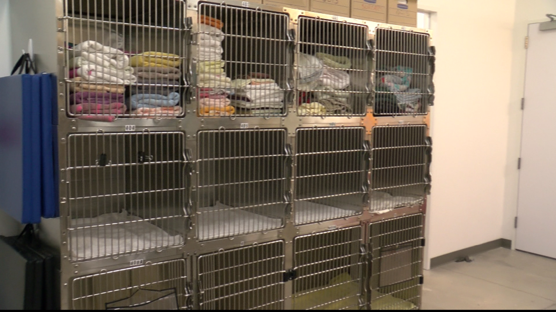Emancipet opened their third Austin-area location Thursday at 1030 Norwood Park Blvd., near the Goodwill and Walmart at Hwy 183 and I-35. (CBS Austin)