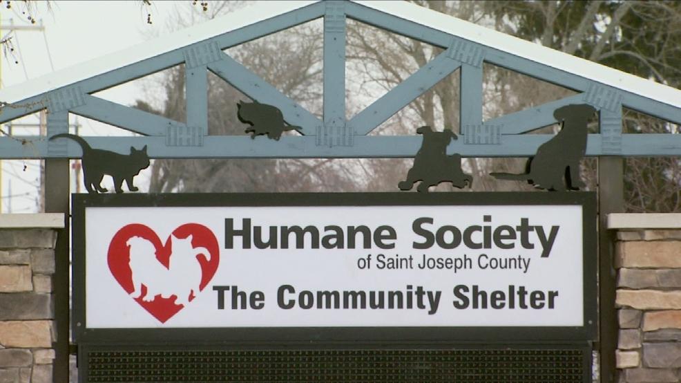Está lloviendo gatos y perros en la Sociedad protectora de animales de San José del Condado - WSBT-TV 1