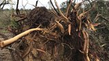 National Weather Service: Tornado hit Laurens Co. Saturday