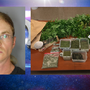 Man arrested and 34 marijuana plants seized