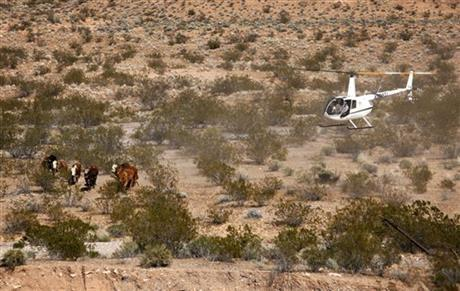 Contractors for the Bureau of Land Management round up cattle belonging to Cliven Bundy with a helicopter near Bunkerville, Nev. Monday, April 7, 2014.