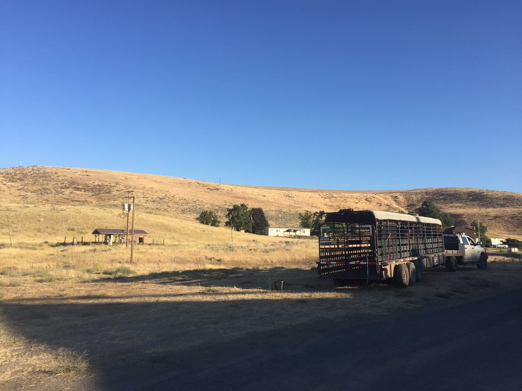 A family gets their three horses ready to evacuate from the Substation Fire burning east of The Dalles, Oregon Tuesday, July 17, 2018. (Photo: Lashay Wesley/KATU News)