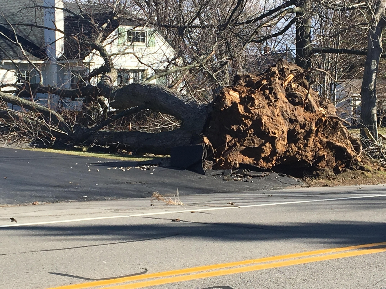 Tree ripped up by roots Howard Road in Gates