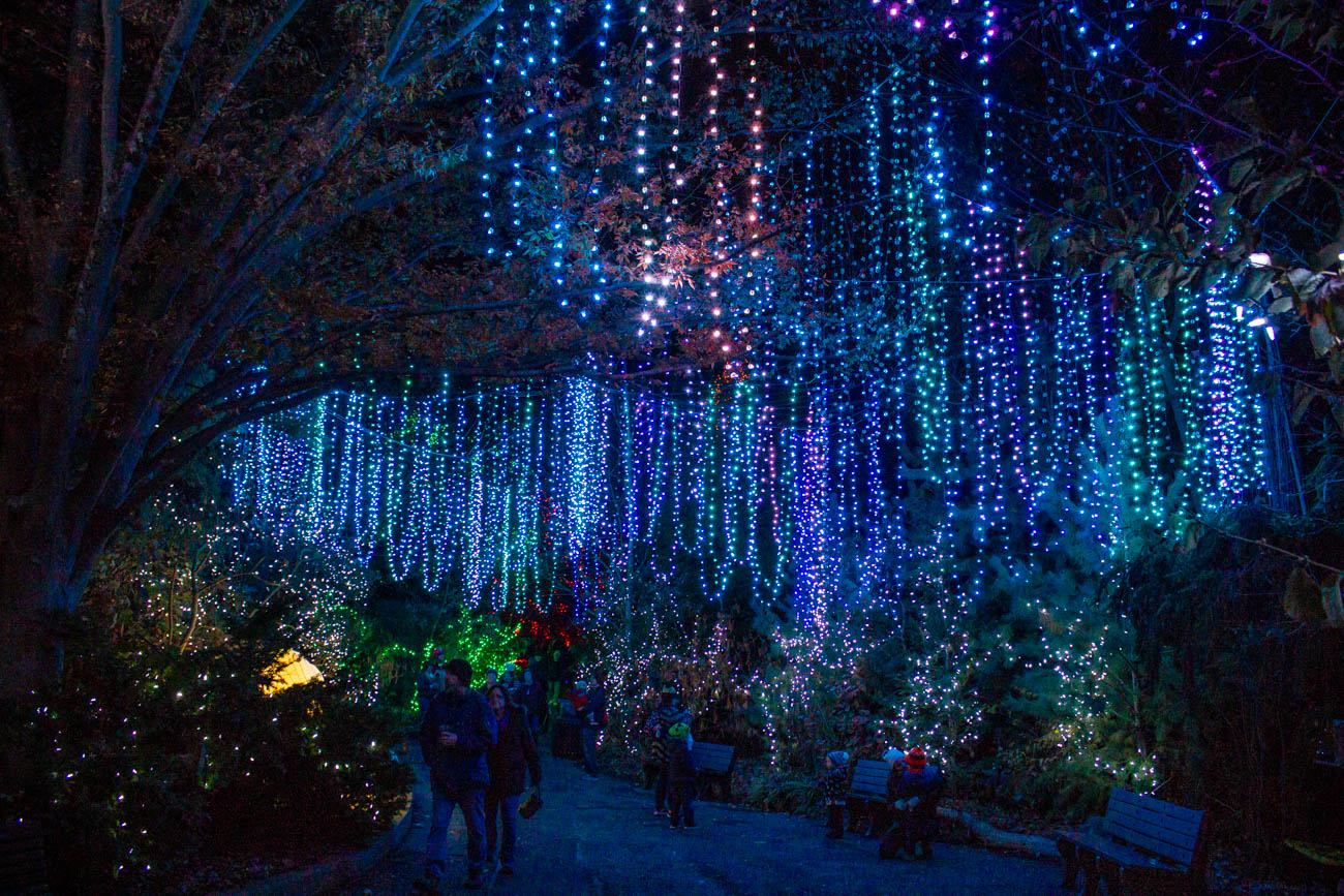 Some of the changes this year include a twist on the original Fairy Forrest—now you'll search for hidden Fiona fairies in Fiona's Fairyland. They've also added a Hippo Hut in her honor, decorated in picture-perfect backdrops. The Northern Lights is another new display with glistening 'stars' dangling above you. Visitors can make a stop at the recently opened Hops Beer Garden to enjoy some stronger holiday spirits, as well. It's also the last season for the 4D Theater and Polar Express experience. The space will be used for food and retail in future seasons. / Image: Katie Robinson, Cincinnati Refined // Published: 11.16.19
