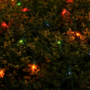 Woman wakes up to yard decorated with Christmas lights