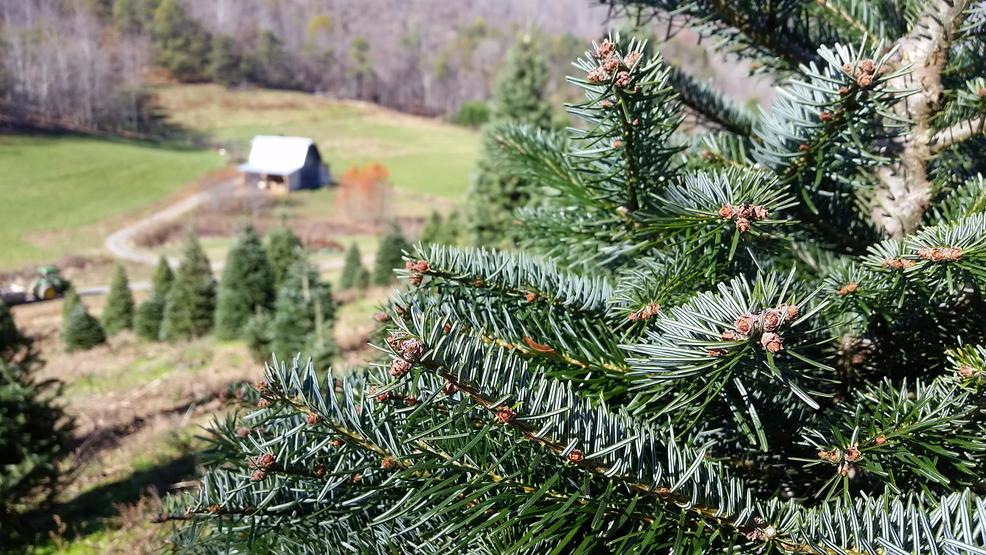 - Christmas Tree Shortage Could Mean Higher Prices WLOS