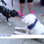 Four-legged friends meet and greet at Paws in the Park