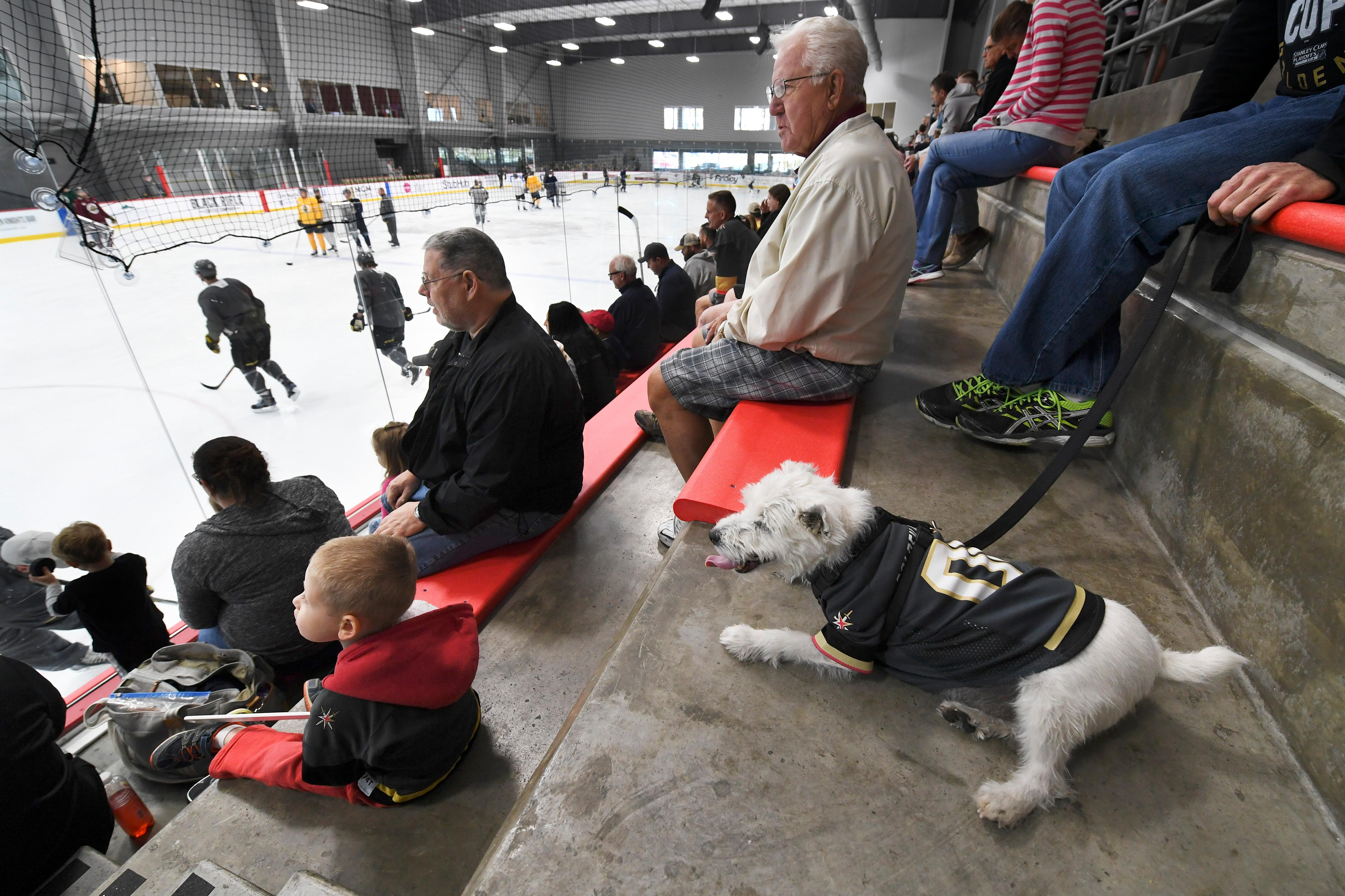 Rick Williams' dog Bark-Andre Furry, named in homage to Vegas Golden Knight goalkeeper Marc-Andre Fleury, watches during the Vegas Golden Knights practice Friday, April 20, 2018, at City National Arena in Las Vegas. CREDIT: Sam Morris/Las Vegas News Bureau