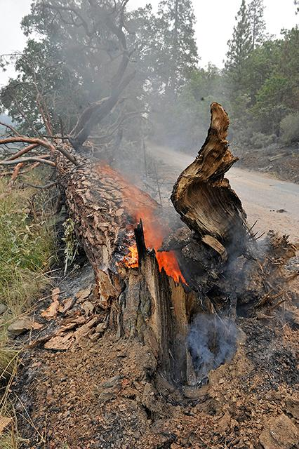 Jamie Lusch / Mail Tribune<br>Fire burns through a downed tree off of Cottonwood Creek Road near the town of Hornbrook.