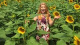 Smith-Perry Berry Farm in Tennessee open for 2018's Sunflower Season