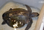 OCAq - Turtle - Hydration Bath.jpg