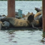 Genius: How Oregon boaters finally solved their pesky sea lion problem