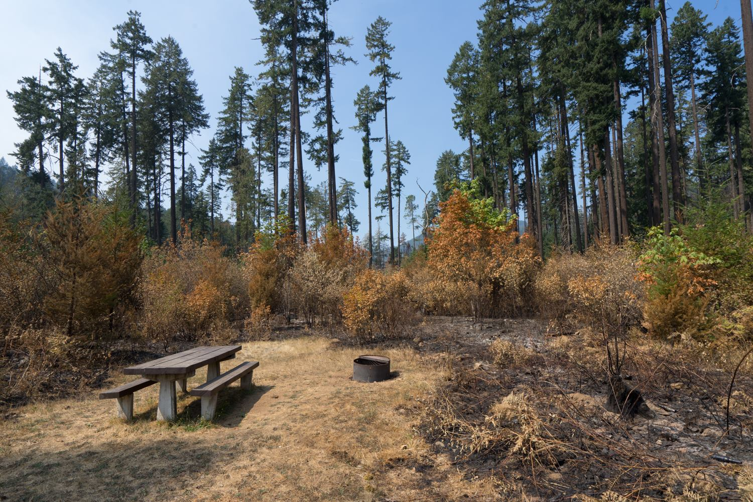 """Bedrock Campground along Fall Creek. The fire scorched grass and brush but most of the larger trees remain intact,"" the USDA Forest Service said."