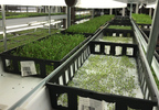 Seeds And Crops In Waterfields' Hydroponic Growing System.jpg