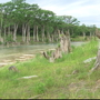 Wimberley resort using torn down trees from flood to rebuild