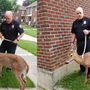 Watervliet Police take care of injured deer found in apartment courtyard
