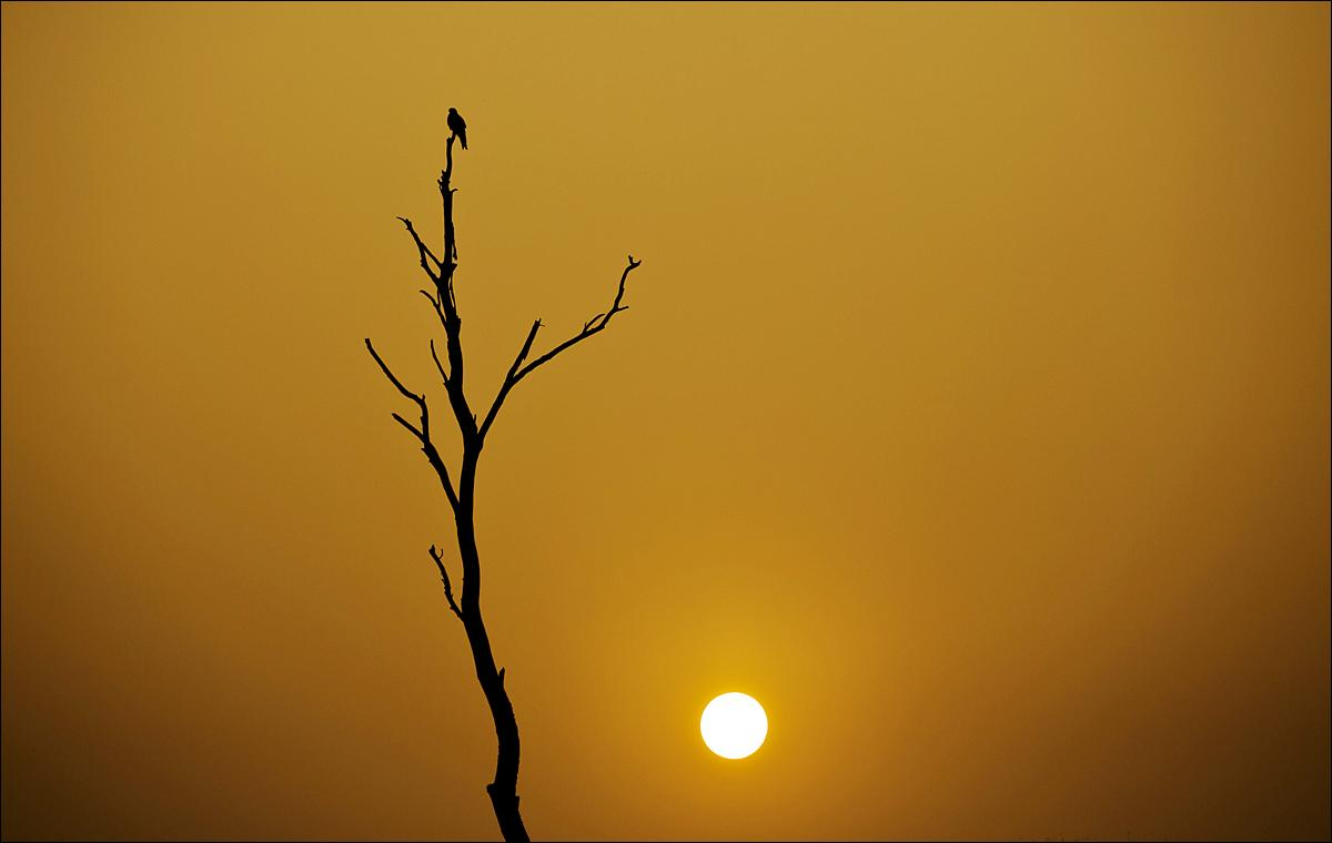 A bird is silhouetted against the sunset on the outskirts of Islamabad, Pakistan, Thursday, Jan. 21, 2016. (AP Photo/B.K. Bangash)