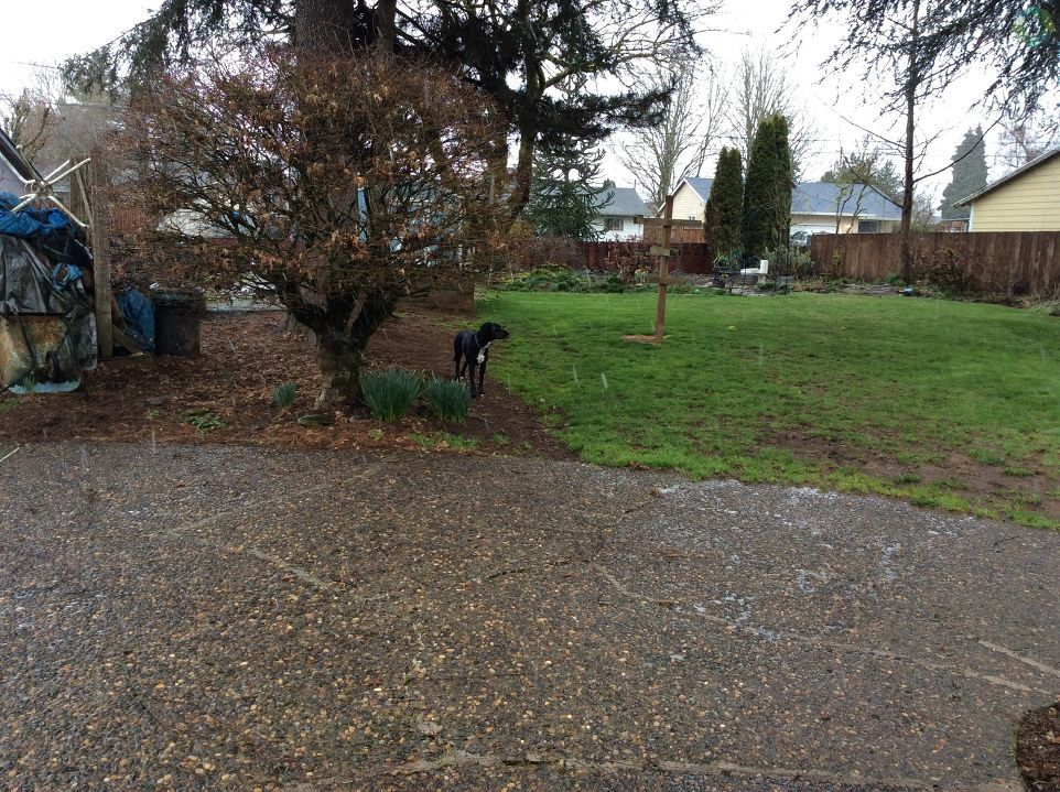 Snowing in Scappoose - Photo from Doran Russell.jpg