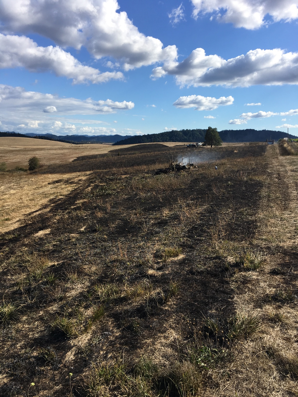 Illegal debris dumping is to blame for a wildfire that sparked in Douglas County, about four miles south of Rice Hill. (DFPA photo)