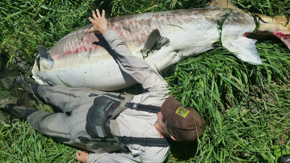 500 pound sturgeon found dead at klamath lake likely 60 for Oregon fish and wildlife jobs