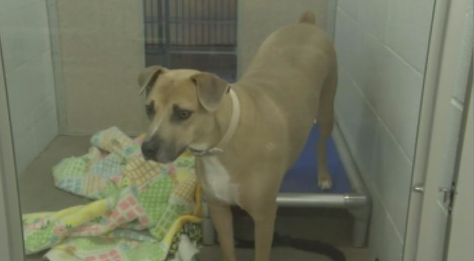 Pet available for adoption at the Quincy Humane Society