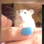 HAMSTER HORROR: Woman forced to flush her hamster at BWI