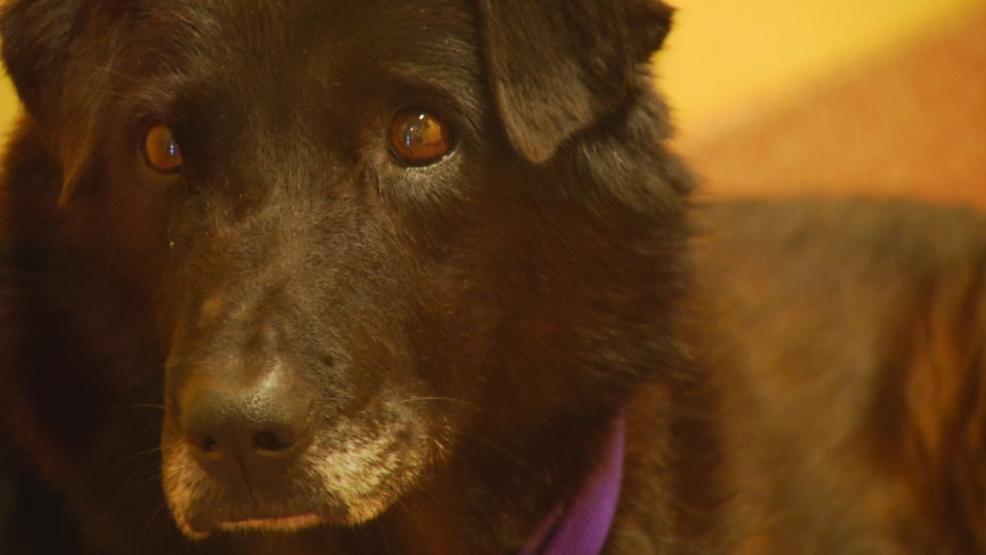 Los perros mayores en Asheville, de la Sociedad protectora de conseguir un aumento de la concesión de WLOS 1
