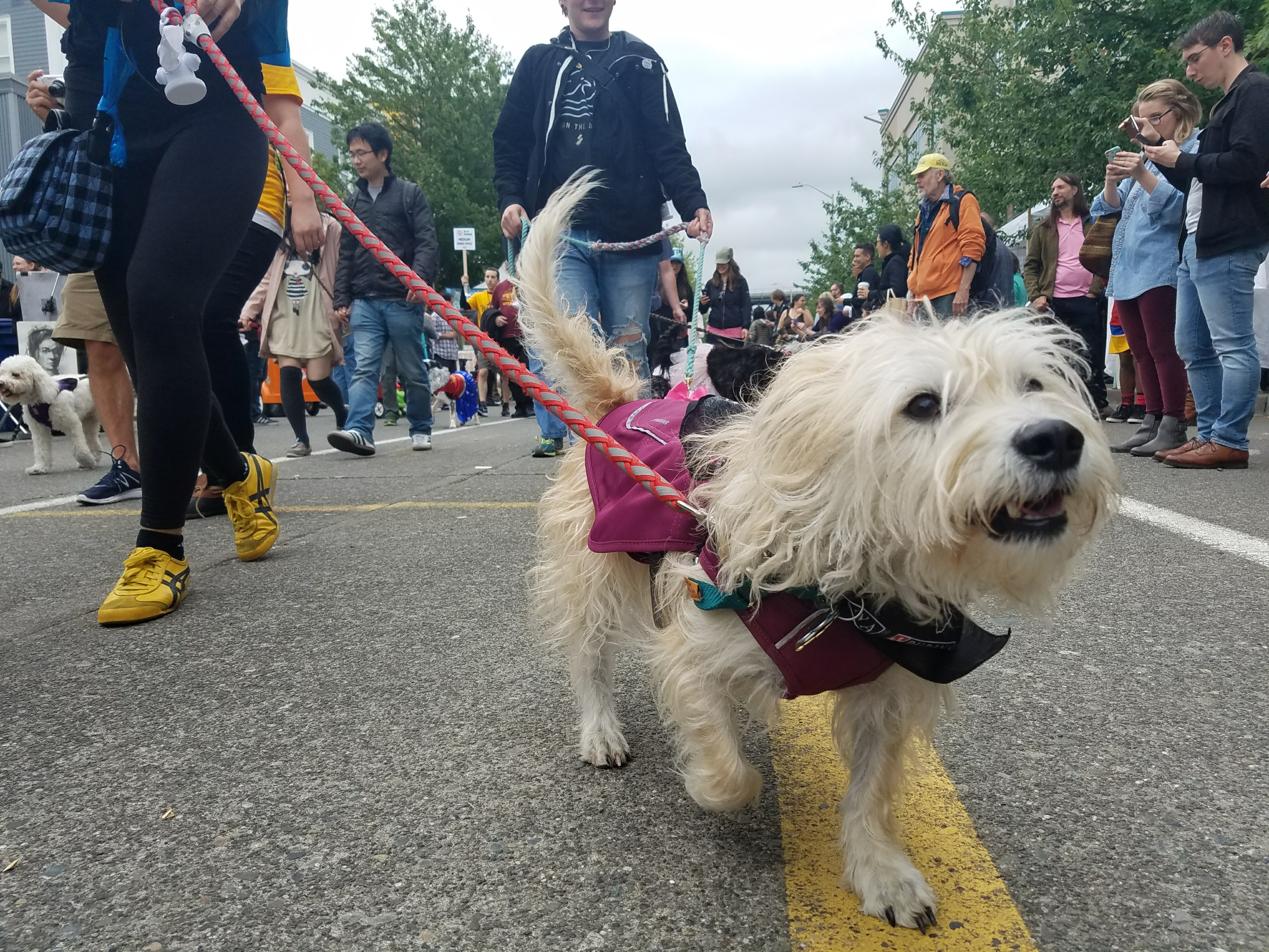 Sunday at the Fremont Fair features the Dog Parade, paralleling its human counter part, marched through the Fair Grounds featuring tons furry friends of all shapes and sizes. June 18 2017. (Image: Just Right by Purina)