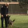 Lawmakers want to make stricter penalties against those who harm police K-9s