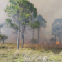 Hundreds of acres up in flames in Fellsmere wildfire