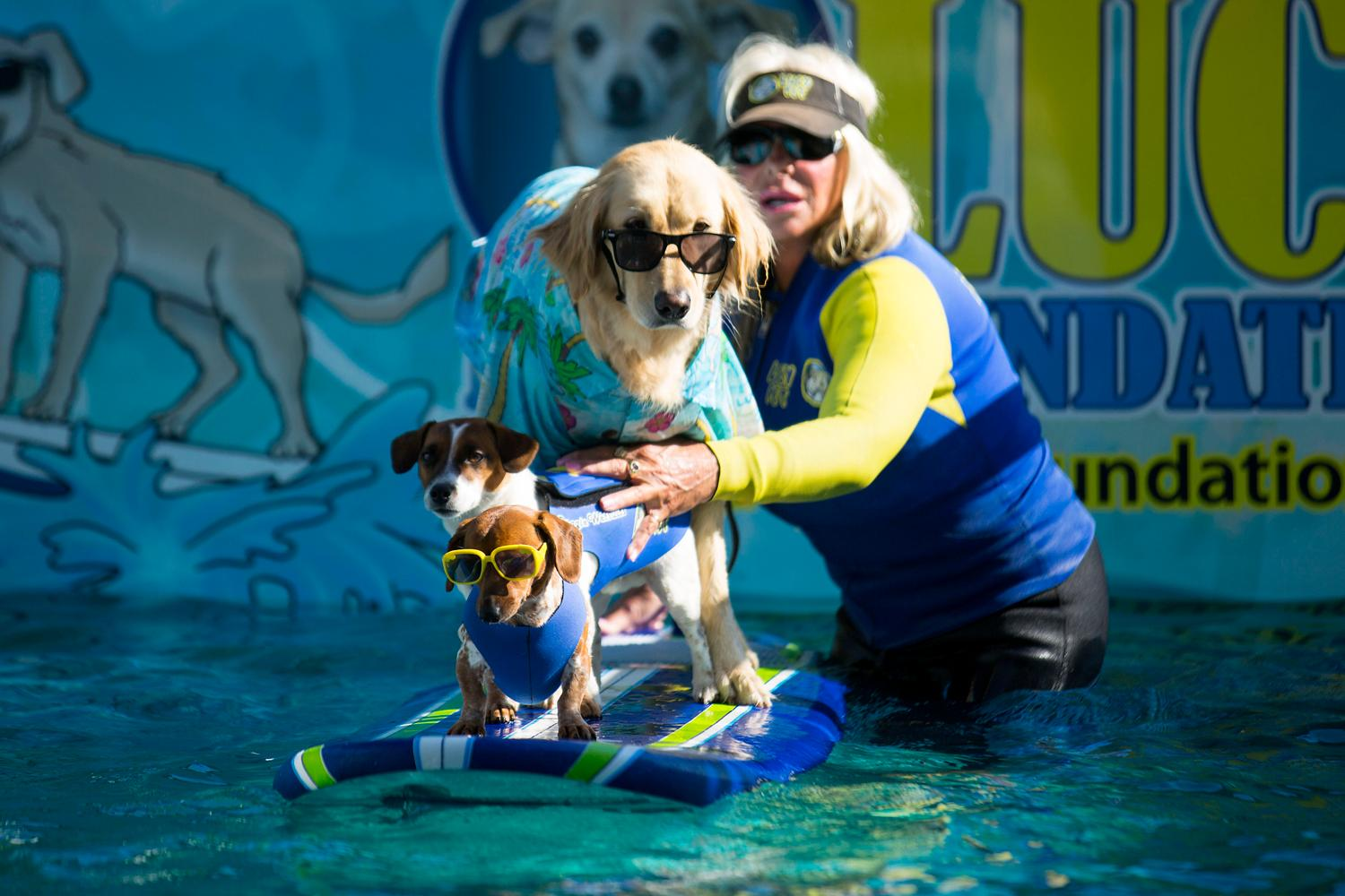 Lucy Pet Products and the Lucy Pet Foundation brought out a wave pool for dogs during Bark in the Park! Mariners fans were allowed to bring their dogs to the game to enjoy the sun, some Mariners baseball, and man's best friend. The next Bark in the Park game will be September 5, against the Houston Astros. (Sy Bean / Seattle Refined)