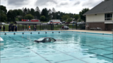 No injuries reported after car goes into community pool in Montgomery County