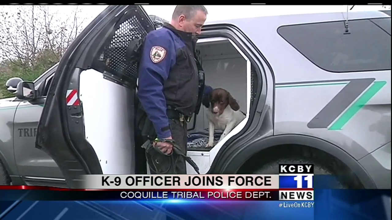 The newest K9 member of the Coquille Tribal Police Department has joined the staff. (SBG photo)