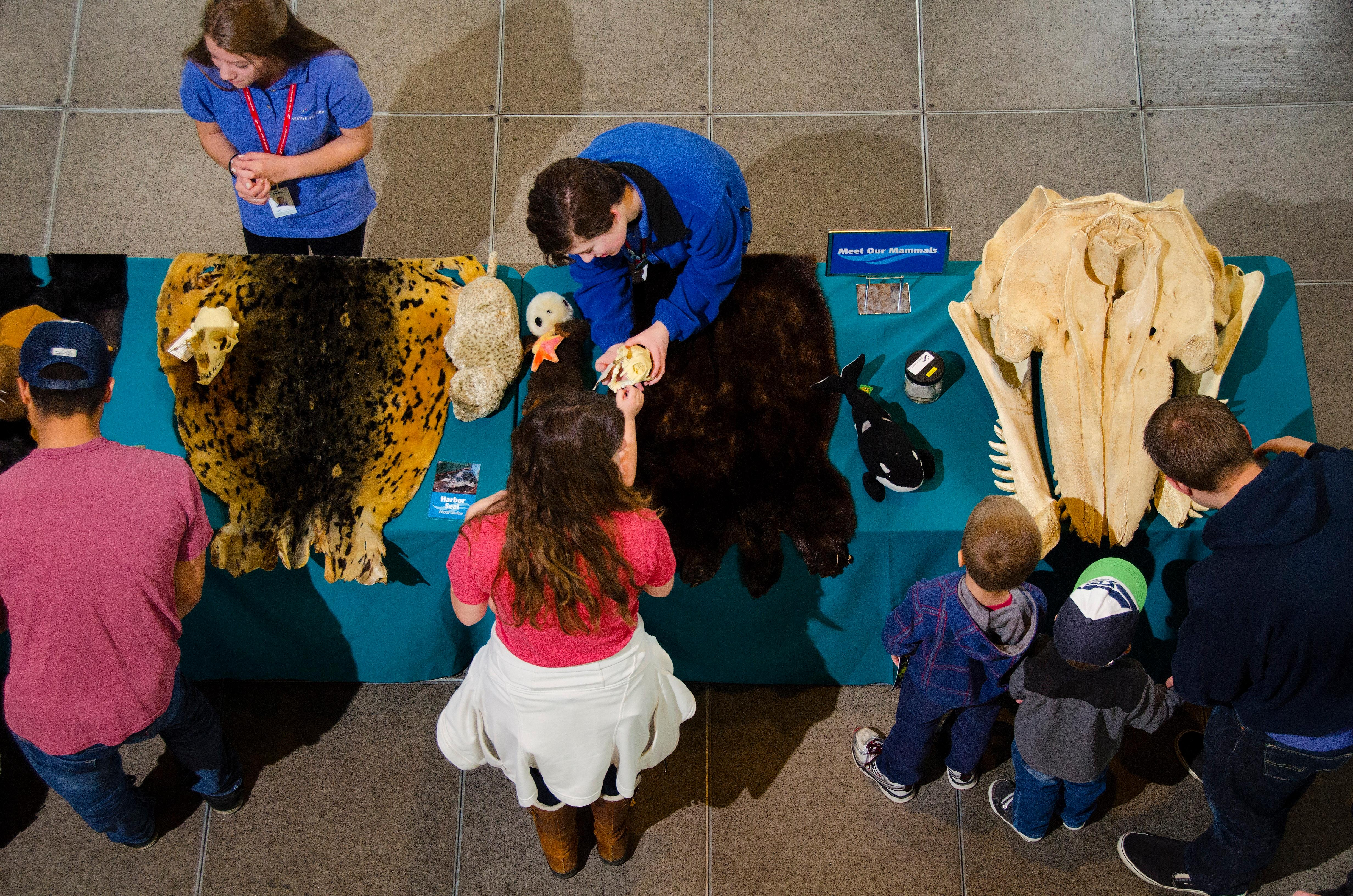 Marine Mammal Mania hands on activity.jpg
