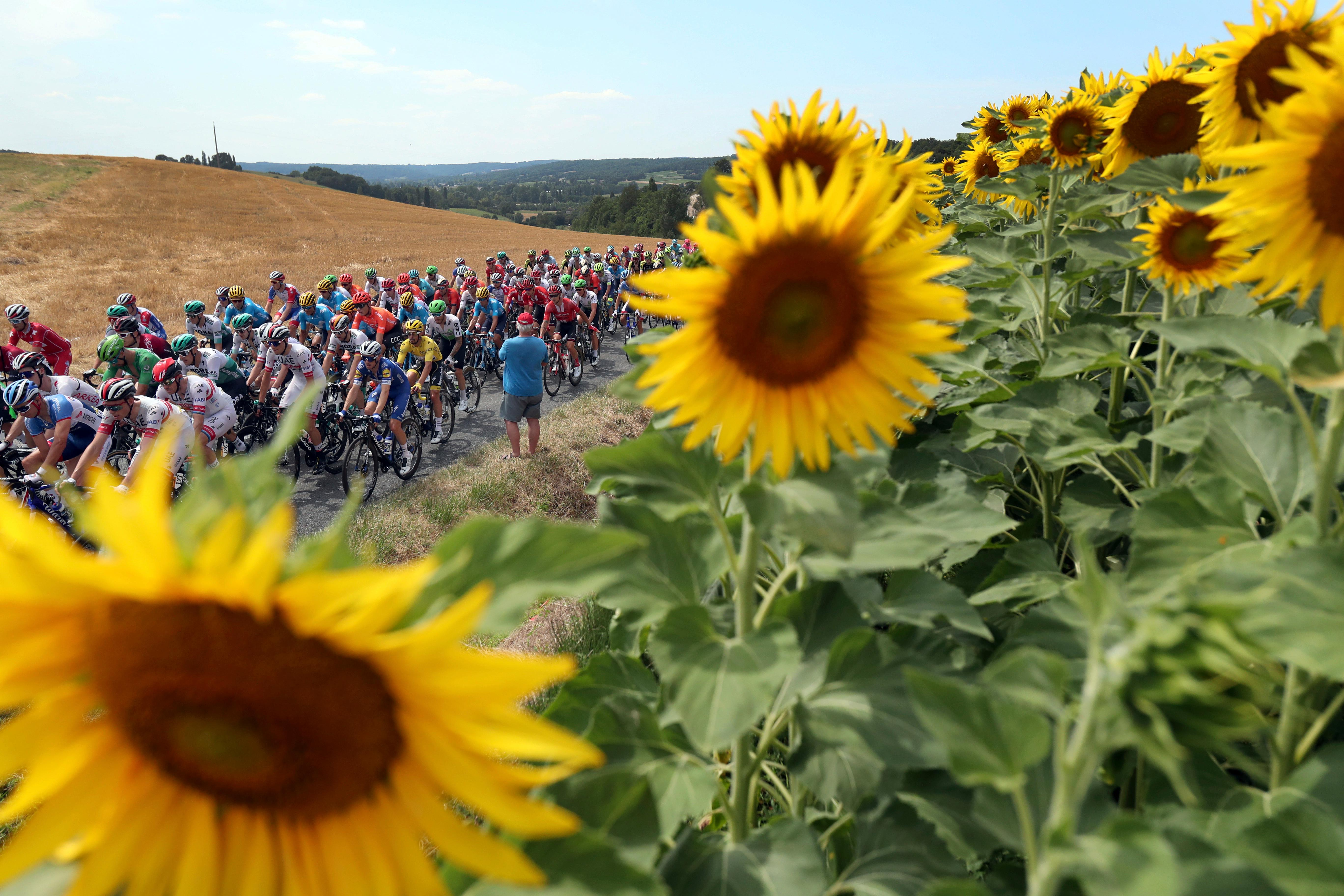 FILE - In this Wednesday, July 17, 2019 file photo the pack rides past a sunflowers fields during the eleventh stage of the Tour de France cycling race over 167 kilometers (103,77 miles) with start in Albi and finish in Toulouse, France. (AP Photo/Thibault Camus, File)