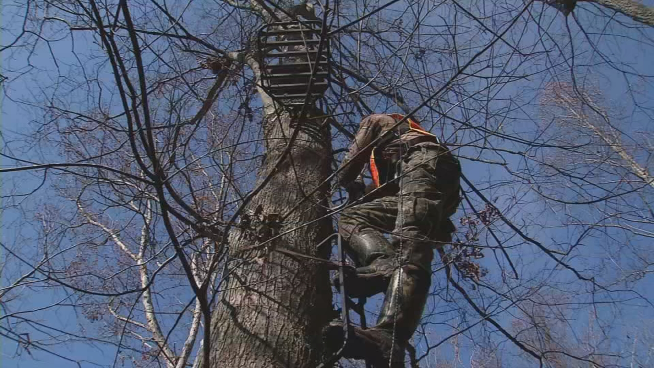 Most hunting accidents in West Virginia involve tree stands. (WCHS/WVAH)