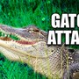 Searchers find body of woman attacked by gator in Florida
