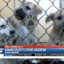 Harlingen Humane Society requests money from city to prevent shutdown