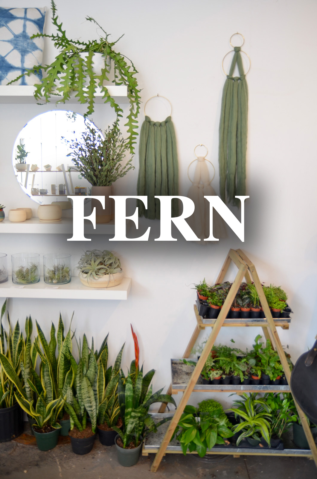Fern at{ }6040 Hamilton Avenue, Cincinnati, OH (45224) / Image: Brevin Couch // Published: 11.26.19