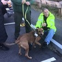 Vietnam veteran reunited with missing service dog