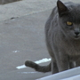 Feral cats make Western Governors' list of invasive species