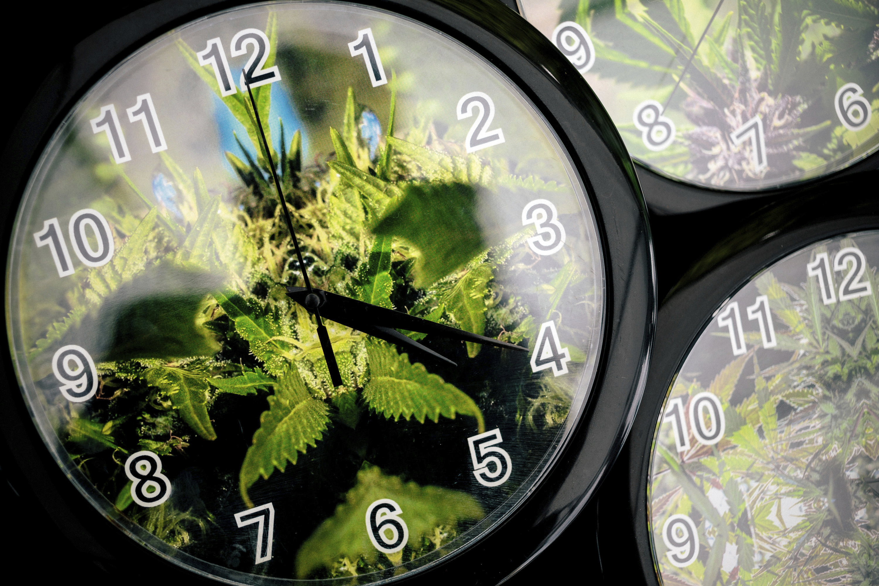 FILE - In this Aug. 15, 2014 file photo, set to the symbolic 4:20 time, weed patterns adorn clocks up for sale on the first of three days of Hempfest, Seattle's annual gathering to advocate the decriminalization of marijuana at Myrtle Edwards Park on the waterfront in Seattle. Thursday, April 20, 2017, marks marijuana culture's high holiday, 4/20, when college students gather - at 4:20 p.m. - in clouds of smoke on campus quads and pot shops in legal weed states thank their customers with discounts. (Jordan Stead/seattlepi.com via AP, File)