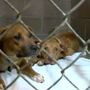 Annual 'Clear the Shelters' adoption event coming up Saturday