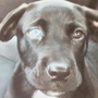 Puppy stolen in East Providence reunited with family