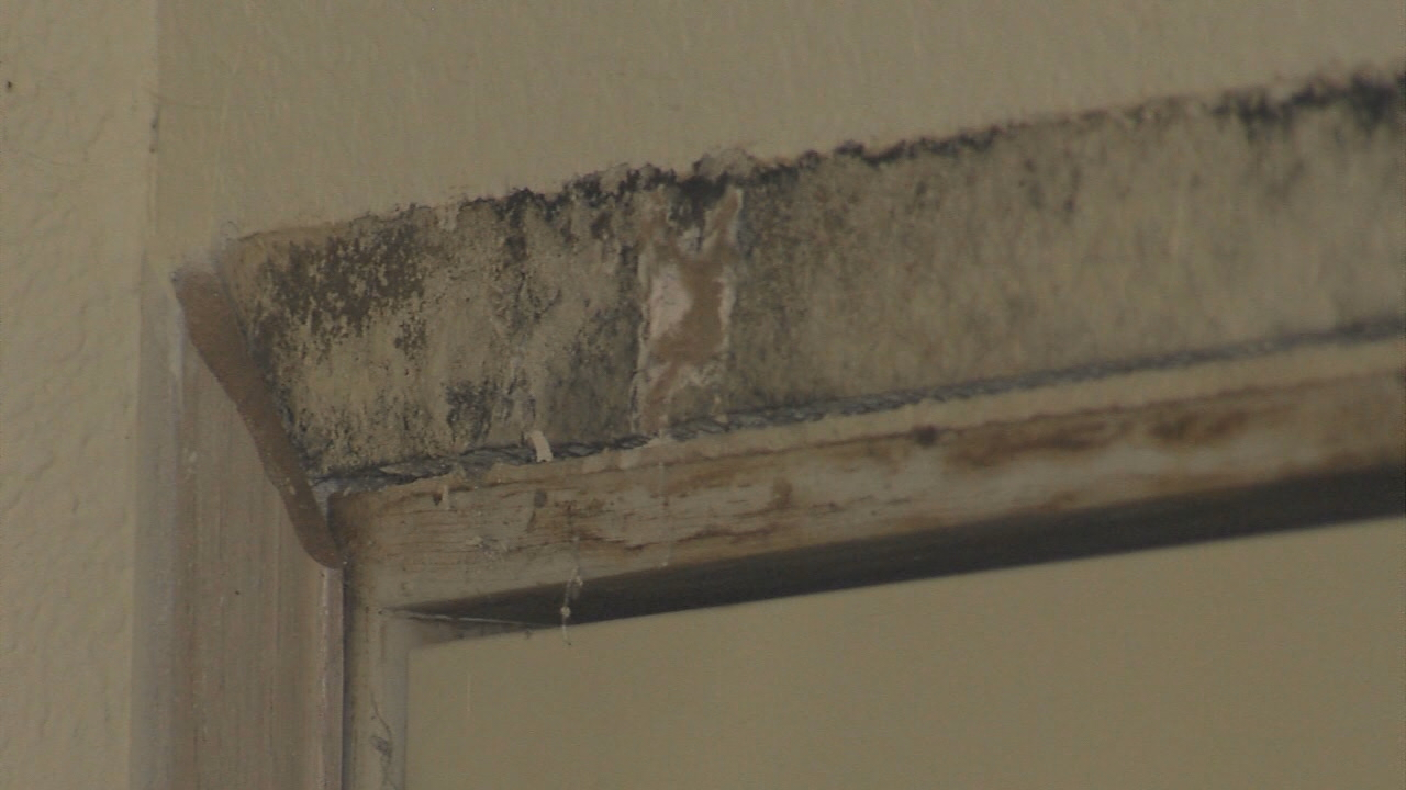 Beau Katelynne Qualls Tells KATV The Mold Inside Of Her Apartment Is Making Her  Sick And Management